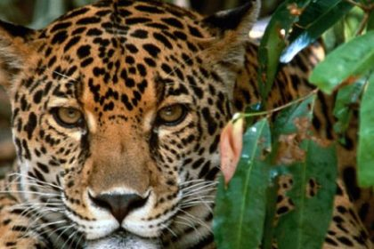 Corcovado National Park Costa Rica Osa