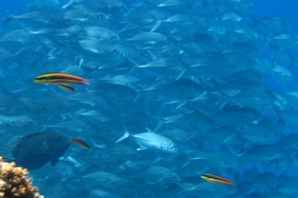 Cano Island Biological Reserve