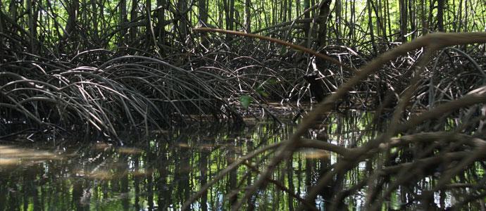 Sierpe Mangroves